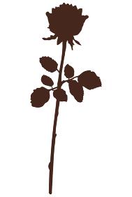 一輪の薔薇のシルエット