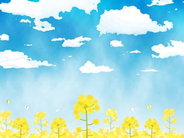 菜の花 青空 景色 風景 水彩