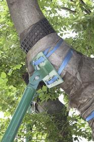 樹木の幹を支える鉄パイプ