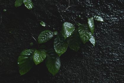 日陰の岩肌と新緑の植物