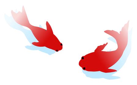 影のついたシンプルな二匹の泳ぐ金魚