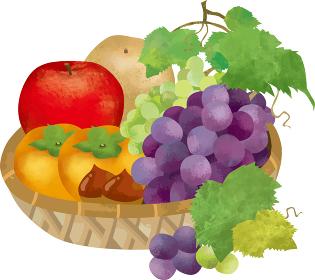 果物:果物 お供え りんご 梨 柿 ぶどう 栗 秋の味覚 水彩 手描き 葉 果実 植物 食べ物