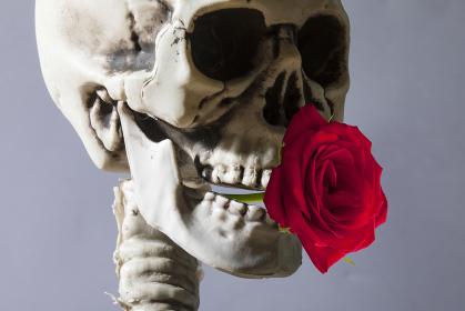 バラを咥える骸骨