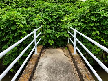 行き止まりの橋