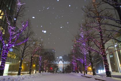 北海道庁旧本庁舎の雪景色の夜景