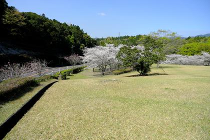 なだらかな丘が広がる知覧平和公園の春