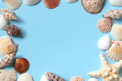 貝殻のフレーム 1