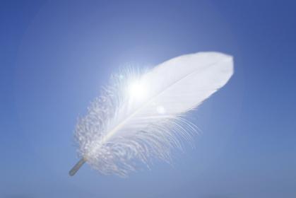 青空に舞う白い羽根