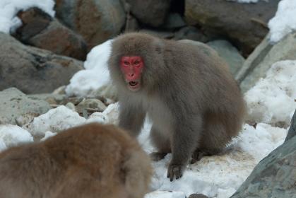 威嚇するお猿さん
