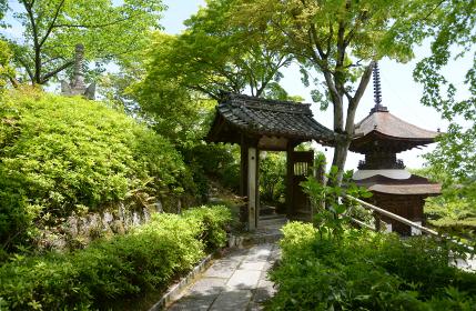 新緑の善峯寺 桂昌院廟入口の門と多宝塔 京都市西京区
