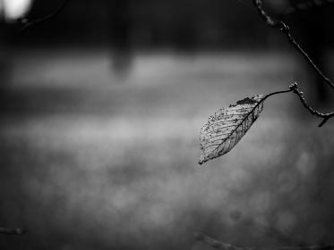 冬枯れの葉 モノクローム写真