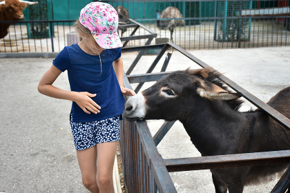 The girl in the zoo was scared of the donkey who approached
