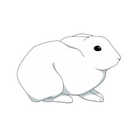 ウサギ おすわり