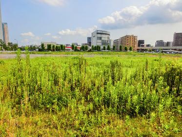 横浜みなとみらいの緑の空き地