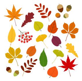 秋の紅葉と木ノ実セット