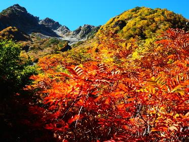 ナナカマドと紅葉の穂高岳