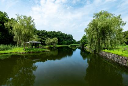 夏の古河公方公園の風景 7月