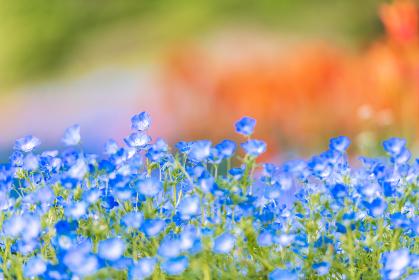 春の火の山公園に咲く綺麗な花畑