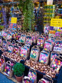 オランダ・花市場にあるチューリップ球根の販売専門店