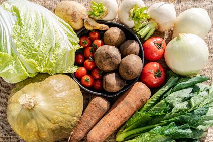 緑黄色野菜 新鮮野菜の収穫 野菜を食べよう