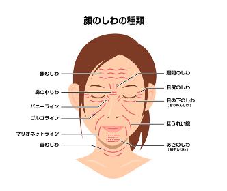 女性の顔のしわ ( 発生場所と名称 ) ベクターイラスト