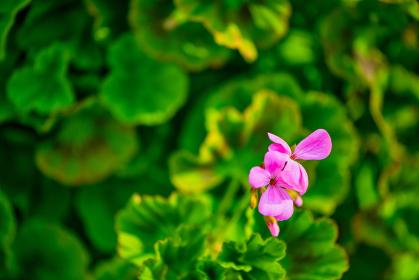 春から初夏にかけて咲く綺麗な花
