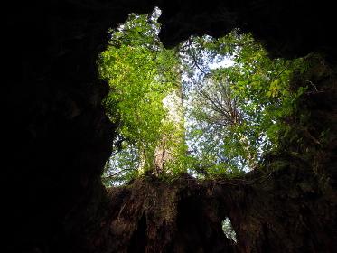 根の中に入ると空がハート形に見える