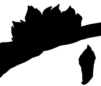 岩礁で育つカメノテのシルエット