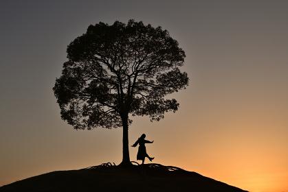 大樹の夕景
