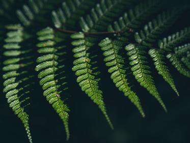 森の中で光を受けるシダの葉