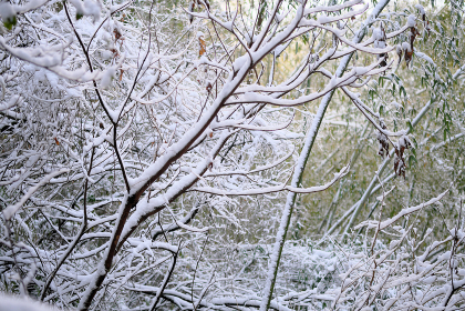 林の中の雪