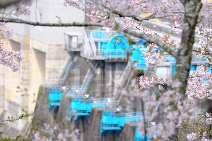 美しい桜の木とダムの施設のアップ