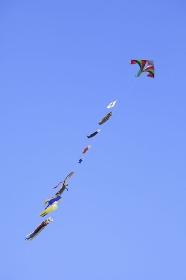 鯉のぼりの凧揚げ