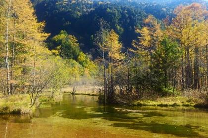 紅葉の上高地 田代池