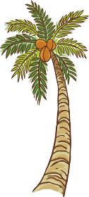 ヤシの木 やし ヤシ 椰子