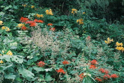 斜面に咲いた赤色と黄色の美しい彼岸花【ネガ調】