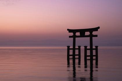 夜明けの白髭神社の鳥居