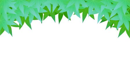 初夏の青紅葉の背景素材、上に青紅葉、白背景