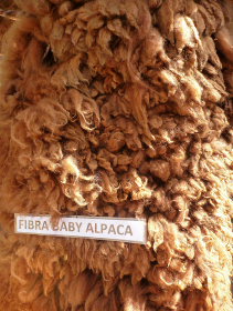 ベビーアルパカの毛刈り後、キャラメル色をした上質でふわふわの天然毛皮