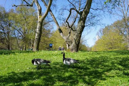 公園にいる野鳥