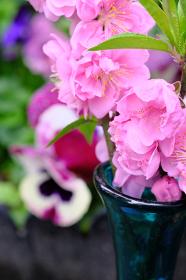 パンジーと花瓶に生けた美しい桃の花
