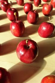 テーブルの上に整列した姫リンゴ 5 縦位置