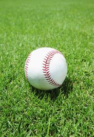 野球ボールと芝生