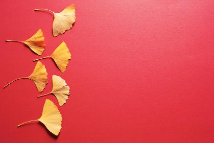 赤い紙の上に置いた六枚の黄色いイチョウの葉。秋のイメージ。