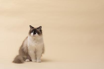 可愛い猫ちゃん
