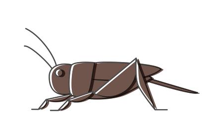 コオロギ、昆虫食で食べられる昆虫