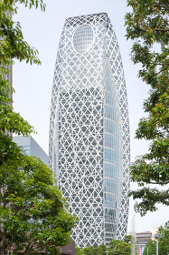 高層ビルと爽やかな並木