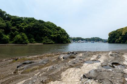 小網代の森の岸辺と干潟 6月 神奈川県三浦半島