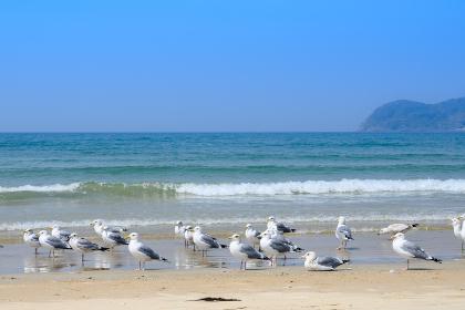 青空と綺麗な砂浜とカモメの飛ぶ夏空の海岸