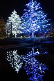 Nabana no Sato Illumination Event - Largest Winter Illumination Spots.